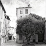 Olive tree gifted by Spain, Céret